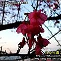 2010-2-23 下午 05-21-53.JPG