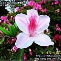 2010-2-23 下午 05-23-23.JPG