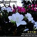 2010-2-23 下午 05-42-21.JPG
