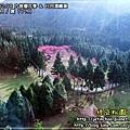 2010-2-8 下午 02-53-37.JPG