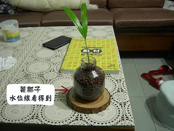 黃椰子、小試身手的作品