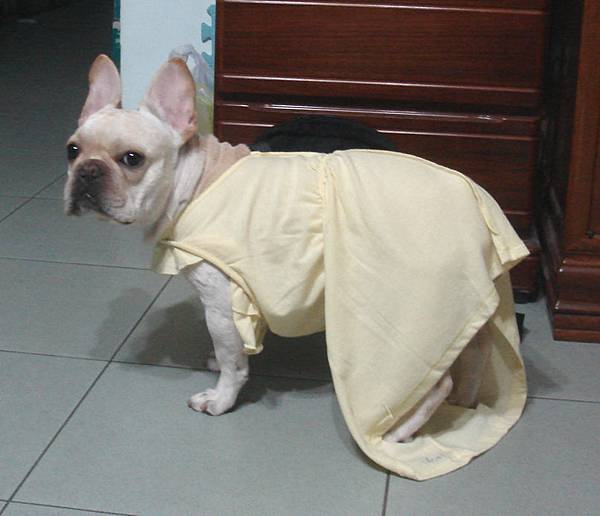 碰秋被穿上裙子