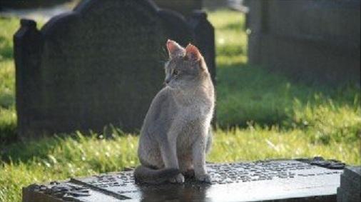 義大利忠貓