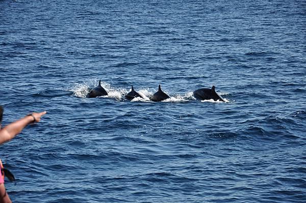 D4H賞鯨+龜島一週 (3)