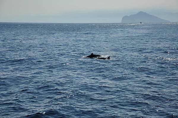 D4H賞鯨+龜島一週 (6)