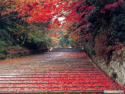 normal_Beautiful Red Tree.jpg