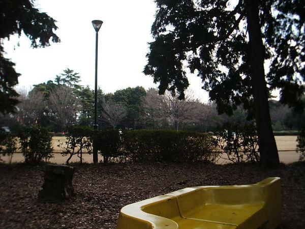 公園的風景