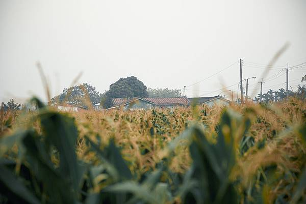 20140119建宏&俐潔-4.jpg