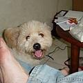 小皮與我的右腳