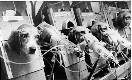 菸草公司動物實驗 米格魯被迫日吸30根菸直到死亡
