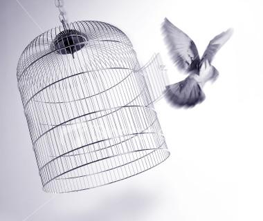 bird_cage.jpg