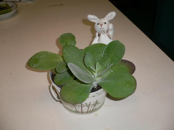 唐印,辦公室植物.JPG