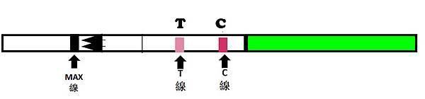 排卵試紙TC