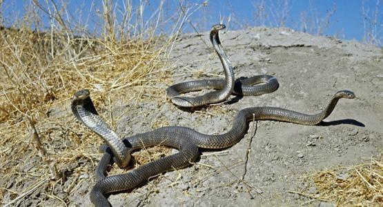 蛇曬太陽.jpg