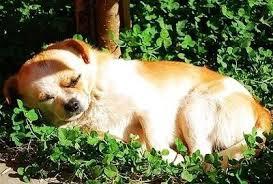 狗曬太陽.jpg