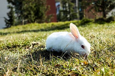 兔子曬太陽.jpg
