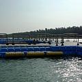 台南七股潟湖遊船