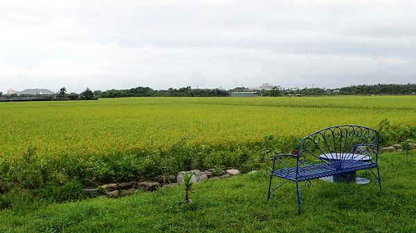 民宿附近全是田