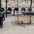 孚日廣場餵鴿子
