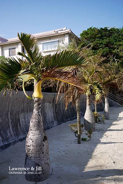 海灘邊的樹