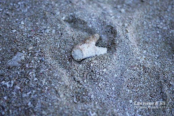 海灘上的珊瑚