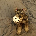 我的玩具球球