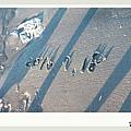 2010-0717-18a飛牛民宿-763.JPG