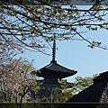 2010-0417京都 (494).JPG