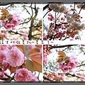 2010-0417京都 1113.jpg