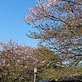 2010-0417京都 (578).JPG