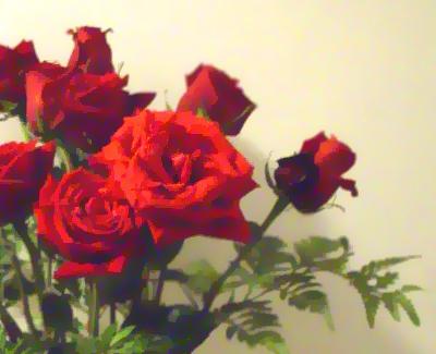 每個月11號的12朵紅瑰玫