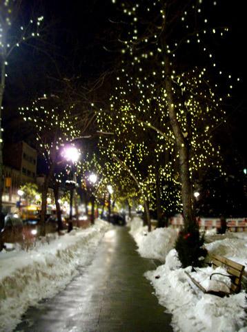 聖誕節前的公園樹道夜景