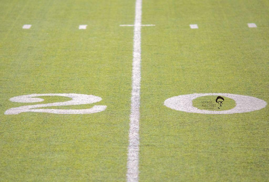 field (1).jpg