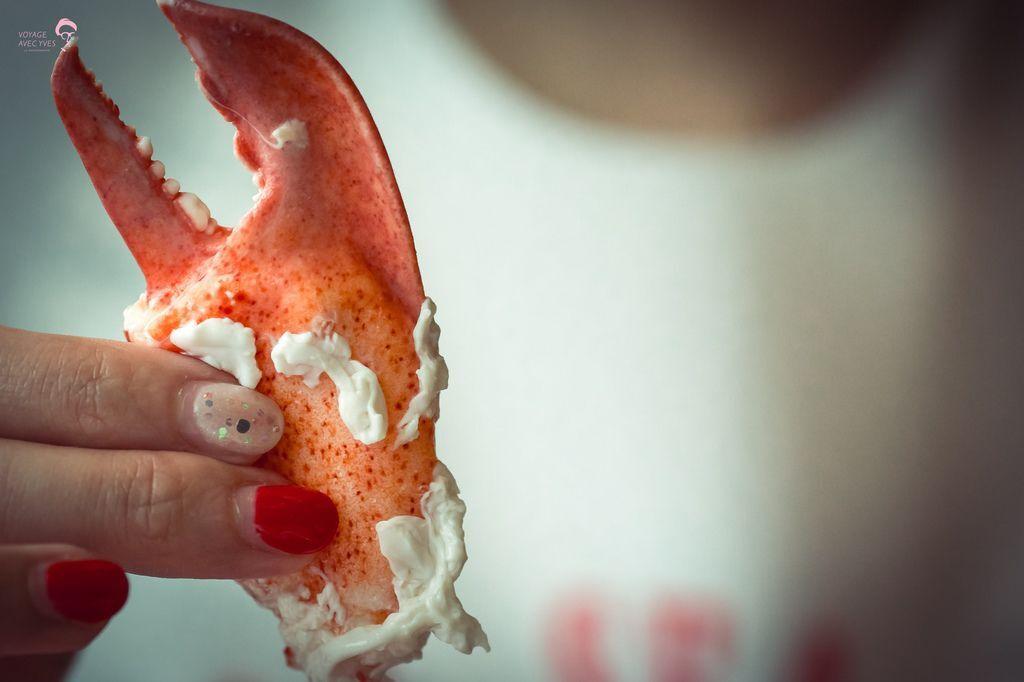 Lobster (2).jpg