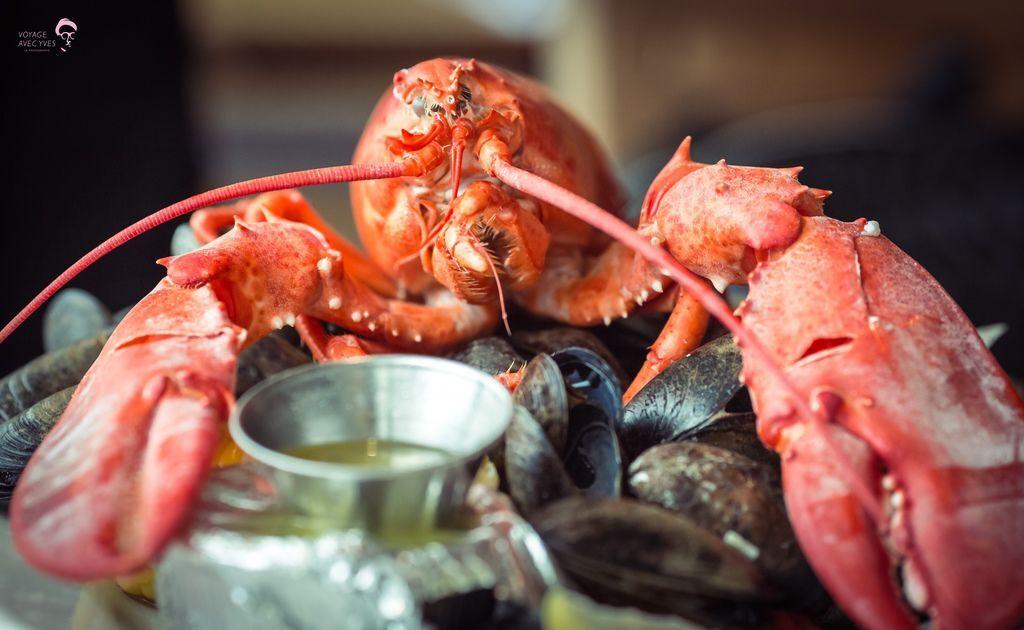 Lobster (8).jpg