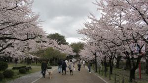 彥根城外公園