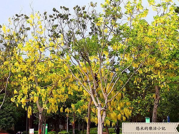 成大校園旁(林森路) - 8.jpg