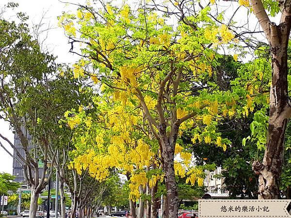 成大校園旁(林森路) - 15.jpg