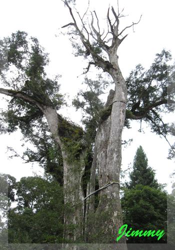 巨木上半身.jpg