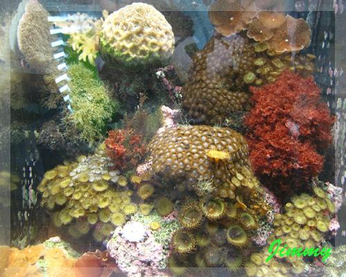 各種珊瑚.jpg