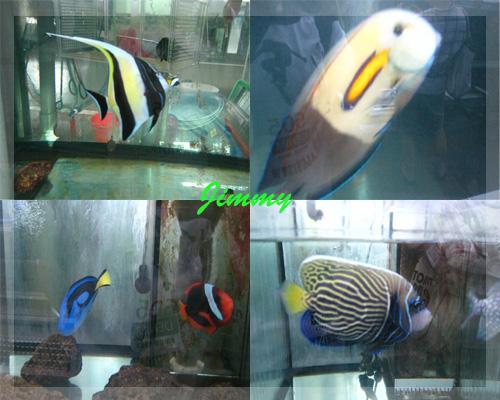 各種熱帶魚.jpg