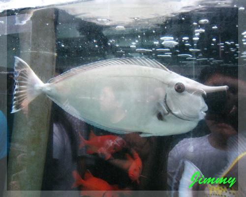 有角的魚.jpg