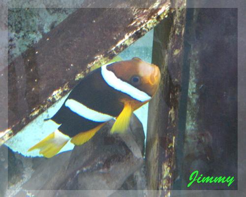 海葵魚.jpg