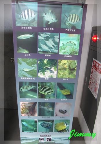 潮間帶魚類.jpg