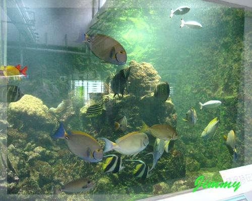 熱帶魚缸.jpg