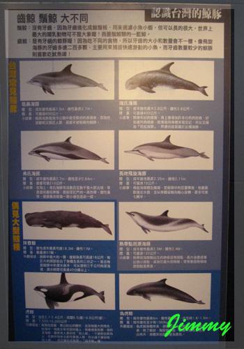 鯨豚介紹板.jpg