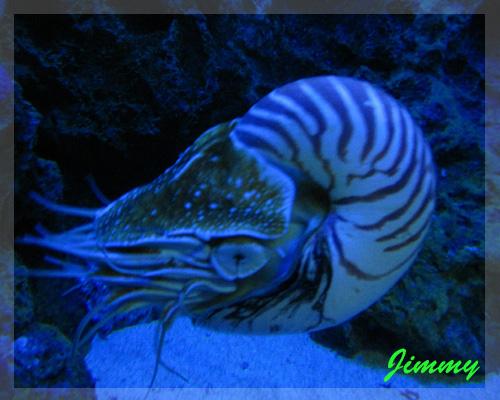 鸚鵡螺.jpg