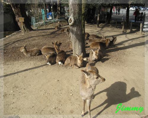 怕生的小鹿