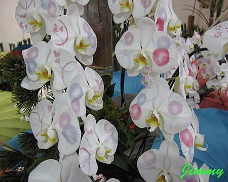 化妝蘭花.jpg