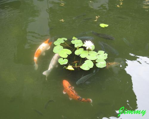 魚池.jpg